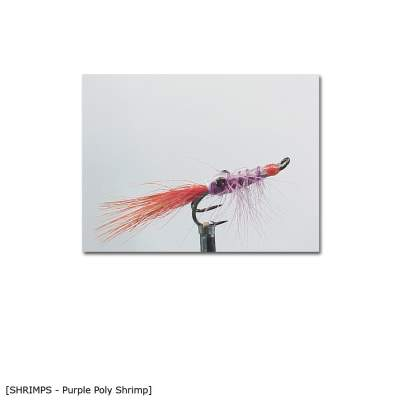 X-Version Fly Purple Poly Shrimp 6