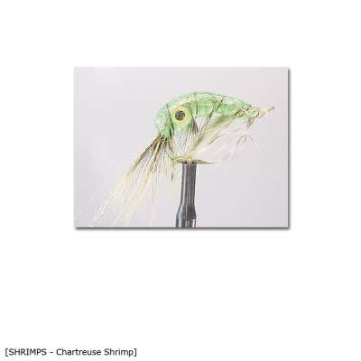 X-Version Fly Chartreuse Shrimp 2