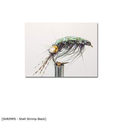 X-Version Fly Shell Shrimp B 10