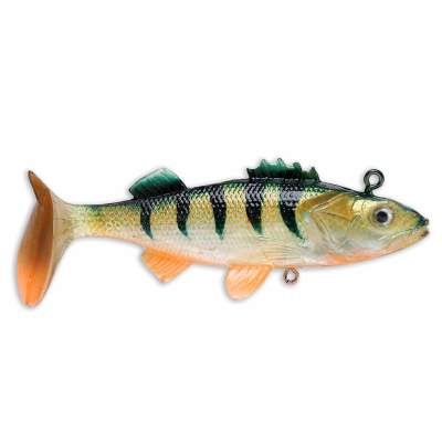 Storm Wildeye Live Perch 10cm  Orange Belly Perch